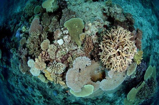 Sau Bay Fiji Retreat: Beautiful hard corals as well as soft corals seen diving