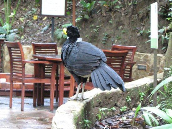 Nayara Resort Spa & Gardens: Costa Rica Bird