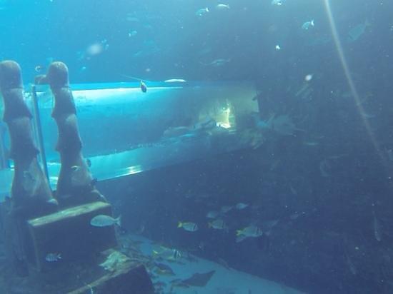 Aquaventure Waterpark: tube sous l'eau