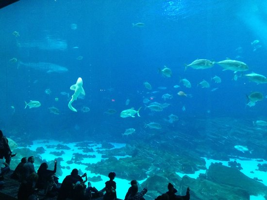 Georgia Aquarium: Grosses Becken