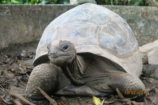 tartarughe giardino Villa Gaiarda