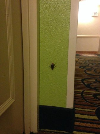 "La Quinta Inn Orlando International Drive North: ""little friend"" waiting to check in"