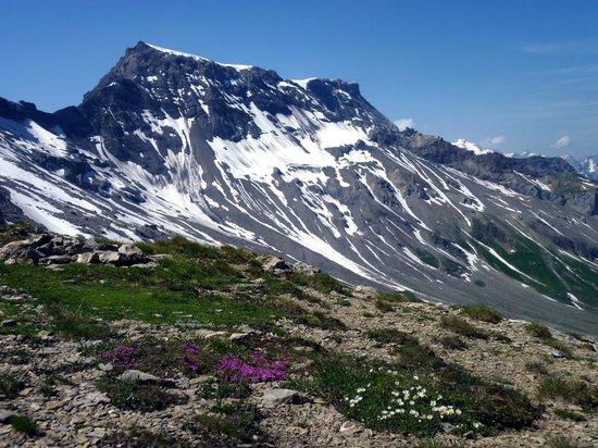 Adelboden : Blumenpracht vor dem Wildstrubel auf dem Grat zwischen Grosslohner und Chindbettihorn