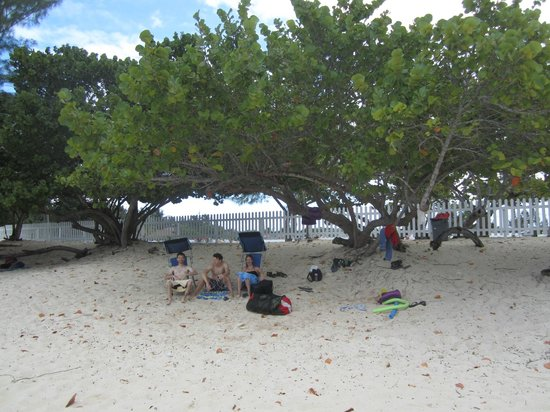 Cemetery Beach And Reef Sea Grape Trees At