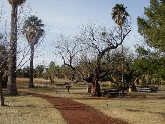 Agua Caliente Park: Park scene