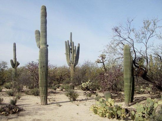 Agua Caliente Park: Cacti and other desert plants along park trails