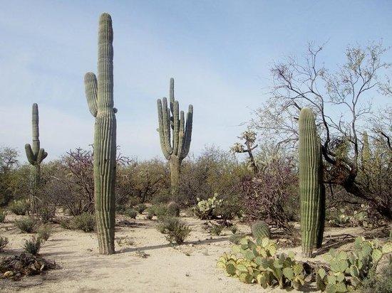 Agua Caliente Park : Cacti and other desert plants along park trails