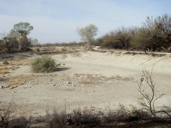Agua Caliente Park: Dried up pond