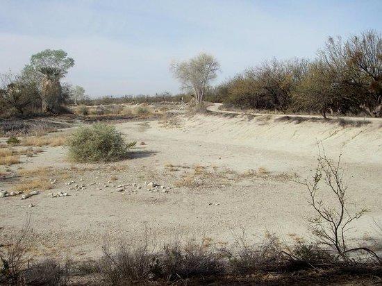 Agua Caliente Park : Dried up pond