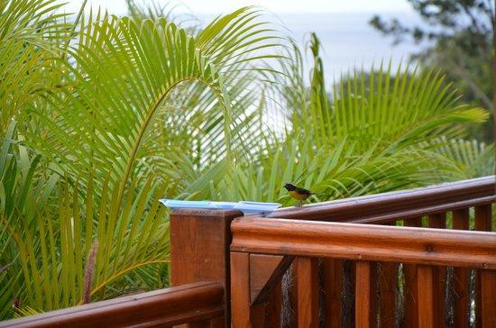 Rochers Caraibes-Eco Village : Déjeuner des sucriers