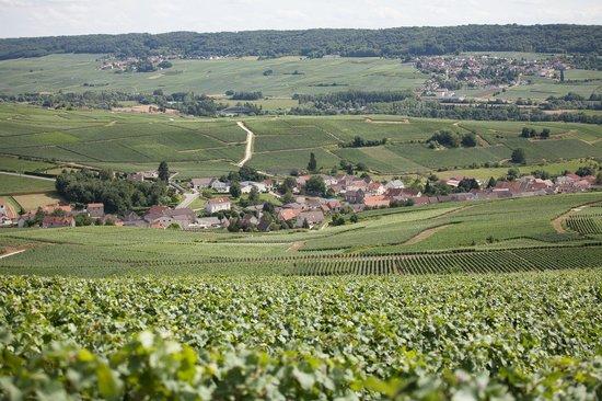 Champagne Collard-Picard : vignoble Collard-Picard