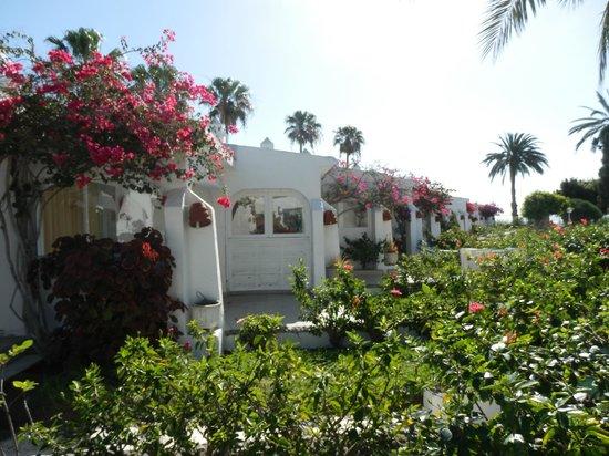 Sahara Beach Club: .