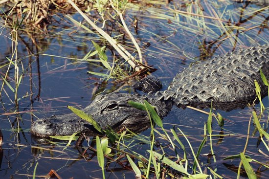 Notch S Airboat Tour