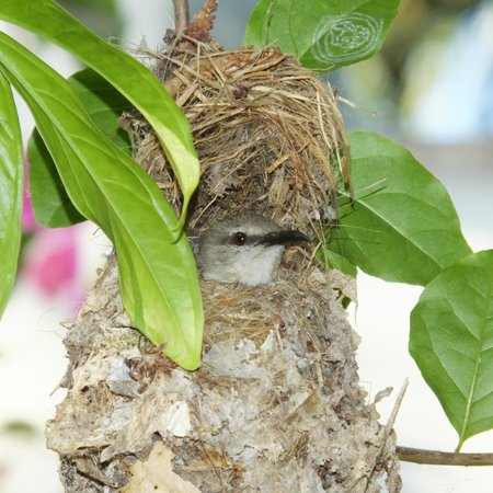 Divine Guest House: Purple-rumped Sunbird nest over the entrance - great welcome for wildlife enthusiasts