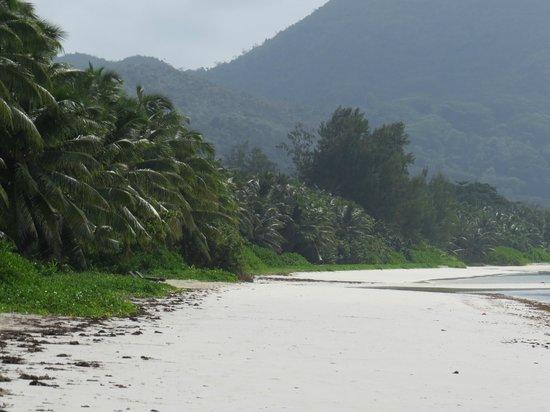 Le Tropique Villa : Starnd