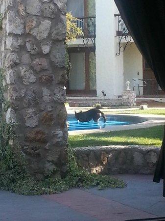 Hotel Casablanca,Spa & Wine: en la piscina, donde un visitante se da un chapuzón