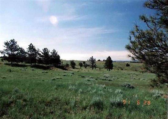 Montana's Rib and Chop House : Miles City
