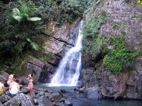Big Tree Trail: La Mina Falls
