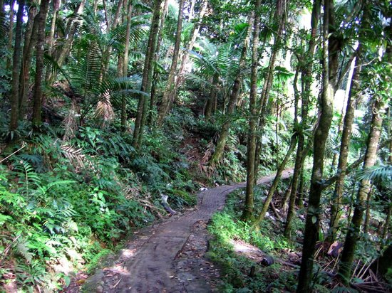 Big Tree Trail: The concrete lined path to La Mina Falls