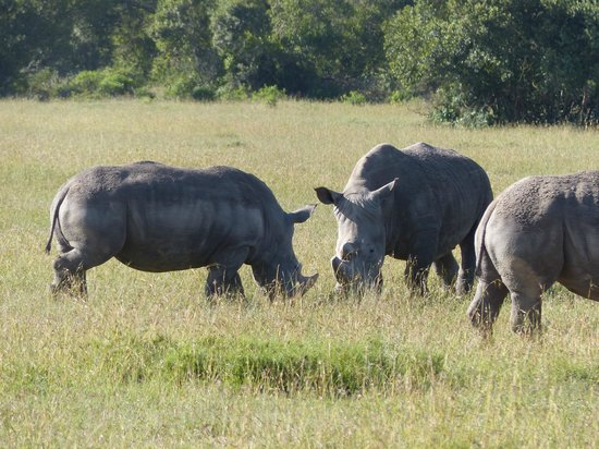Chalkoko Safaris : Some of the many Rhinos we saw