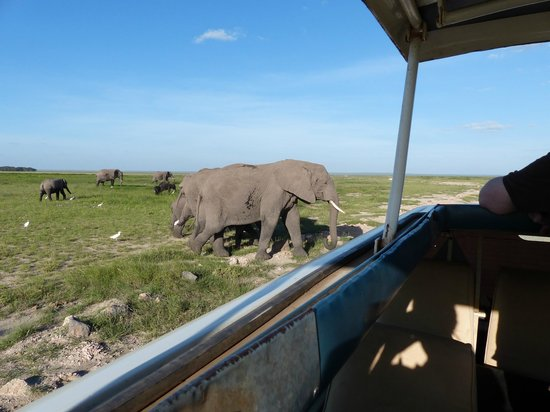 Chalkoko Safaris : We were so happy to see the beautiful Amboseli Elephants