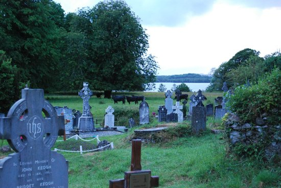 Muckross Abbey : Check out the cows behind the Cemetery