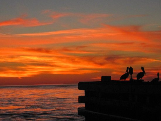 Anna Maria Sailing Adventures: gorgeous sunset