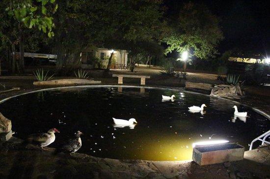 Camp Itumela: Lago com patos no camping