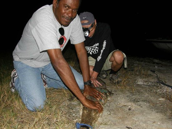 ACES / American Crocodile Education Sanctuary : Tim and Valentino are bonding!