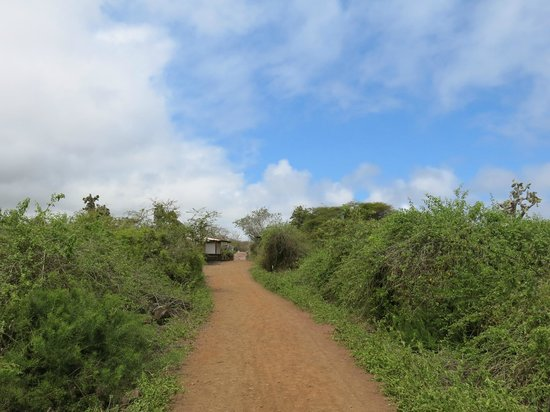 Charles Darwin Research Station : Trail