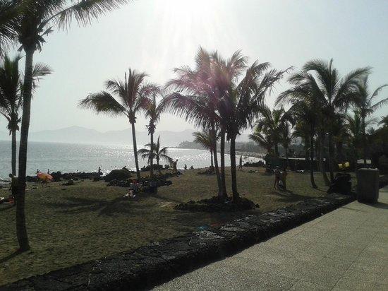 Plaza Azul: Palm trees and sandy beach