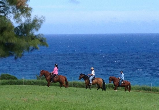 Hawaii Paso Finos: Horseback riding Paso Fino horse and whale watching