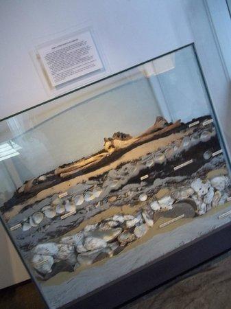 Paranaense Museum : Museu Paranaense