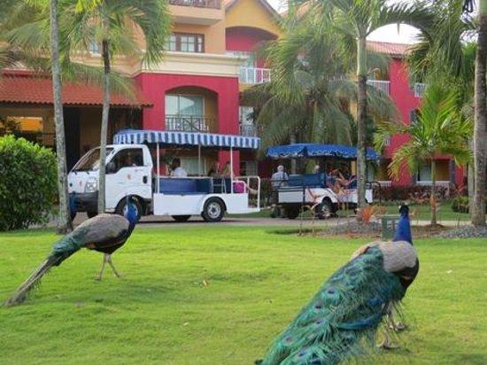 Caribe Club Princess Beach Resort & Spa : Ala sector bloque Cayena