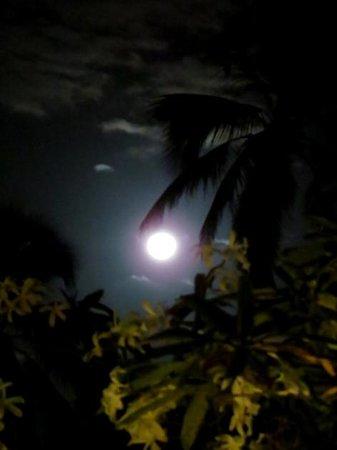 Caribe Club Princess Beach Resort & Spa : Aspecto de una noche con luna