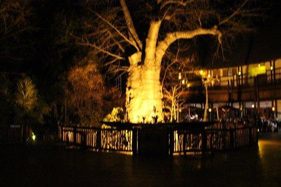 Cresta Mowana Safari Resort and Spa: Hall de entrada com Baobá