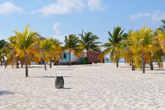 Playa Paraiso: Palme