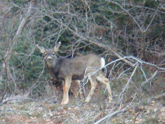Taylor Creek: We saw a family of deer.... elk or mule deer?
