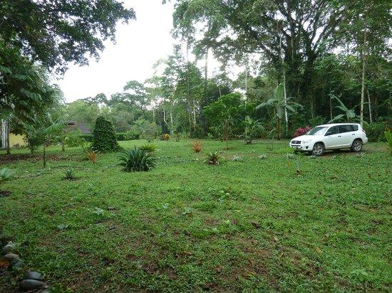 Cabinas Wolfsong Cahuita: Aussicht in den Garten vom Cabina aus
