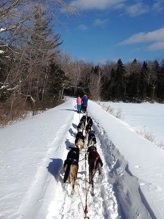 Telemark Inn Wilderness Lodge: New England Dogsledding