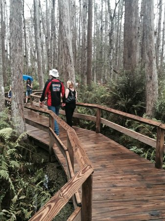 Gatorland: Serene, swamp board walk, surrounded by gorgeous groves of trees