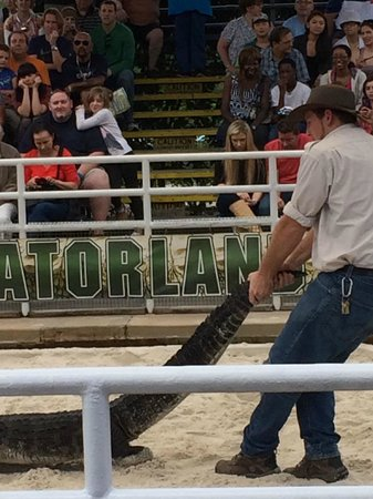 Gatorland: One of the milder examples of cruelty to alligators in the center ring