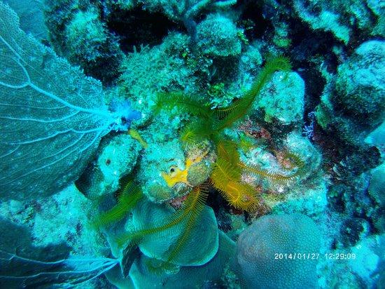 Xanadu Island Resort: Diving Belize