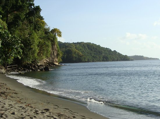Mango Bay Cottages: a view from the beach