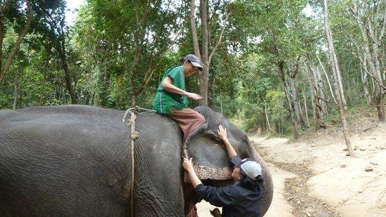 Patara Elephant Farm - Private Tours : Riding The Elephant Bareback