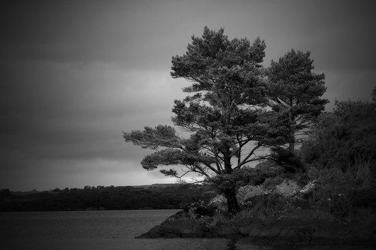 Lough Leane: the shoreline