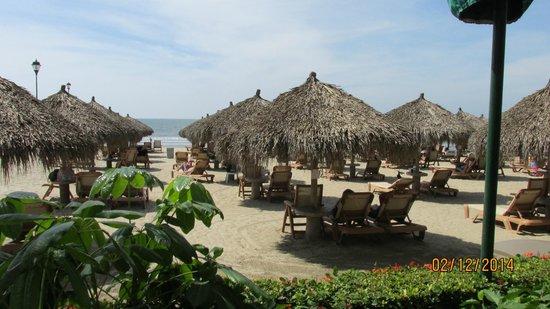 Paradise Village Beach Resort & Spa : Beach chairs at ocean
