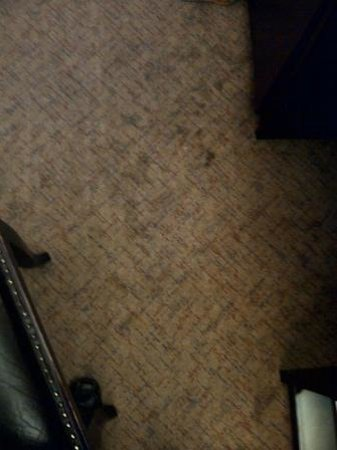 Hotel Colbert: Moquette sale