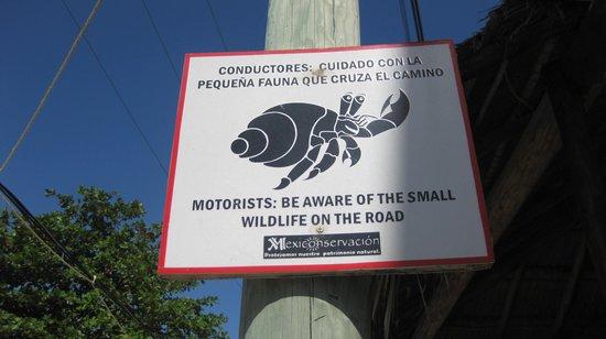 La Buena Vida Restaurant : More road signs on the way