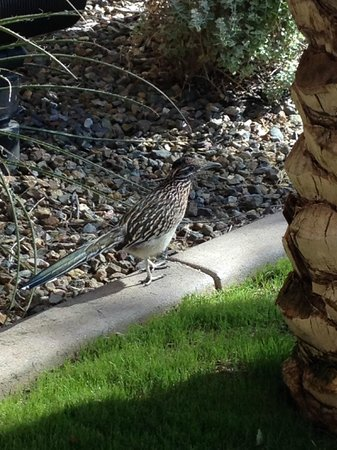 Homewood Suites by Hilton Phoenix Chandler Fashion Center: Hotel Mascot likes Bacon